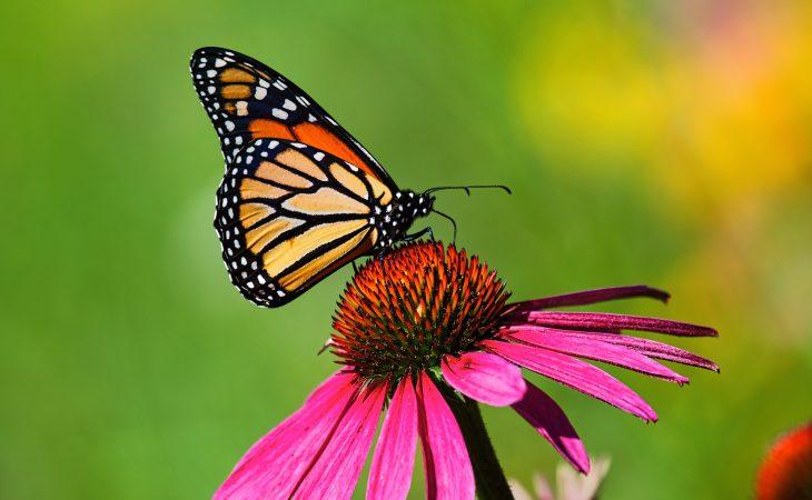 Fridlysta blommor och växter Image