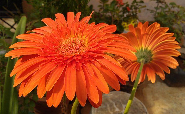 Vanliga inomhusväxter Image