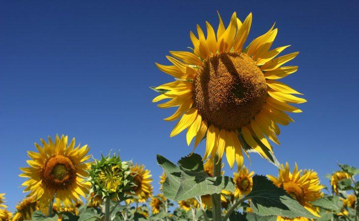 Hur ska en blomma behandlas? Image