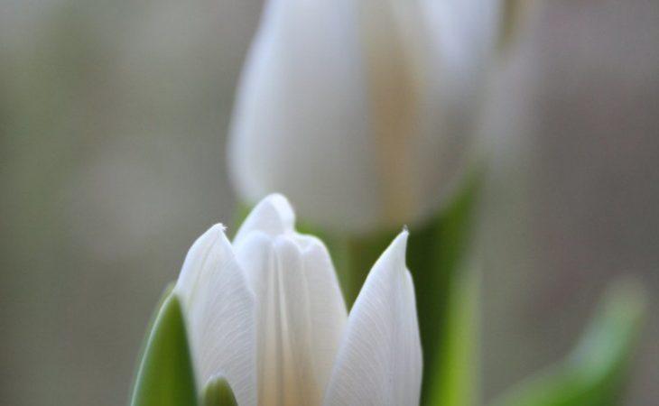 Guide till rätt växt Image