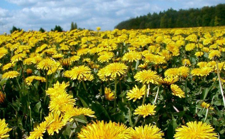Blommor som ingrediens i skönhets- eller hälsoprodukter Image