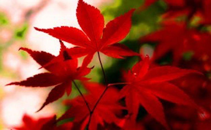 Blommor på hösten Image