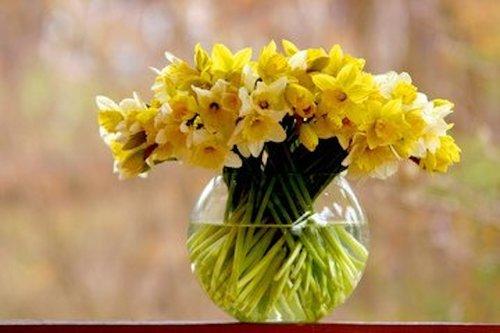 Vårens vackraste växter Image
